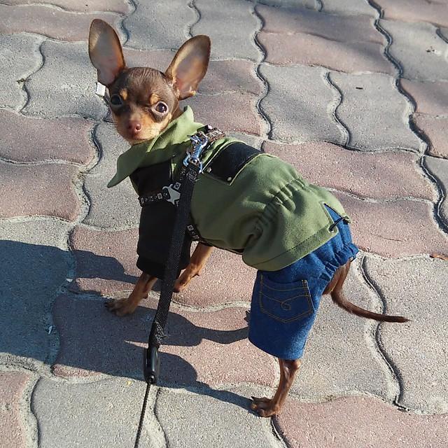 Выгул щенка (меры предосторожности)