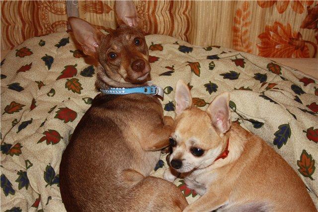 собаки с лишним весом